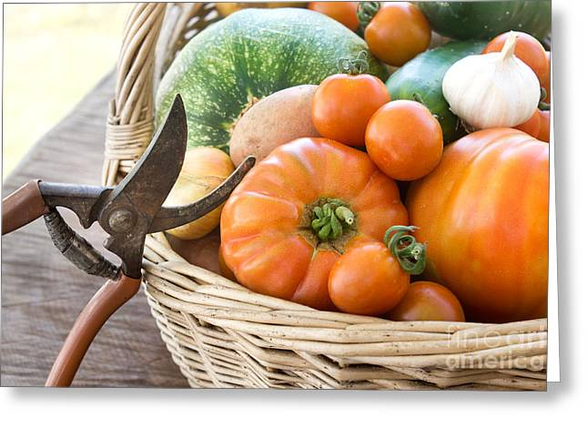 Freshly Harvested Vegetables Greeting Card by Mythja  Photography