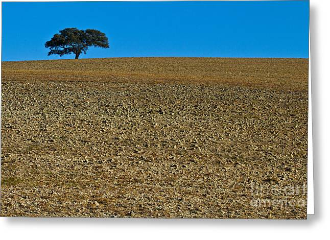 Freshly Ploughed Field     Greeting Card by Heiko Koehrer-Wagner