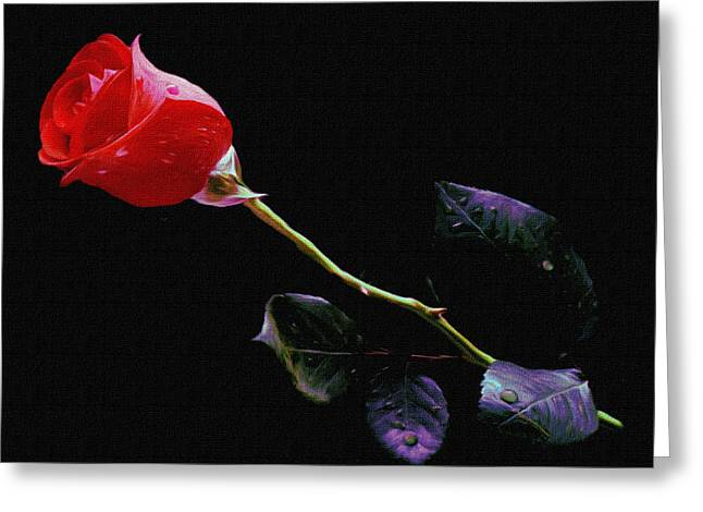 Freshly Watered Red Rose Greeting Card