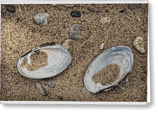 Freshwater Clam Shells Michigan Greeting Card