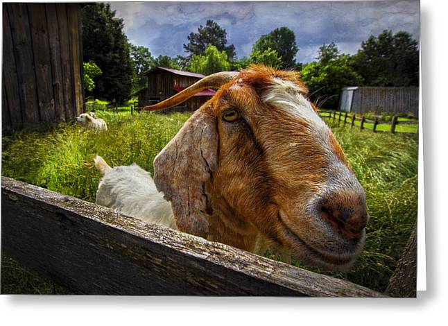 Friendly Goat Greeting Card by Debra and Dave Vanderlaan