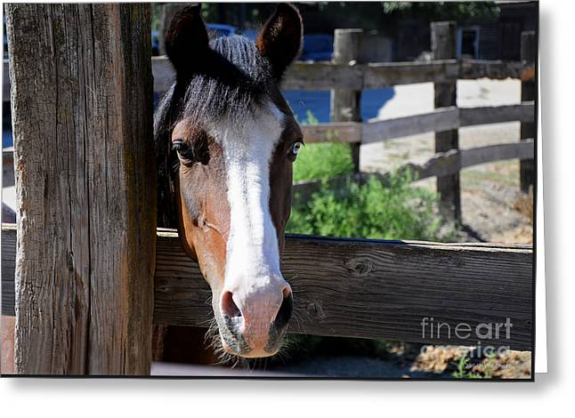 Friendly Horse Greeting Card