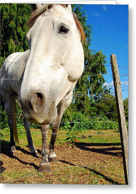Friendly Horsey Greeting Card by Mamie Gunning