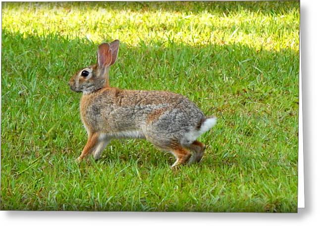 Friendly Rabbit I Greeting Card by Lynn Griffin