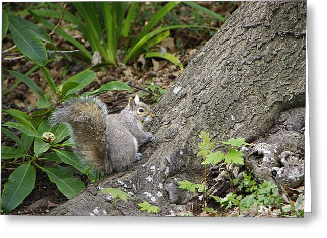 Greeting Card featuring the photograph Friendly Squirrel by Marilyn Wilson