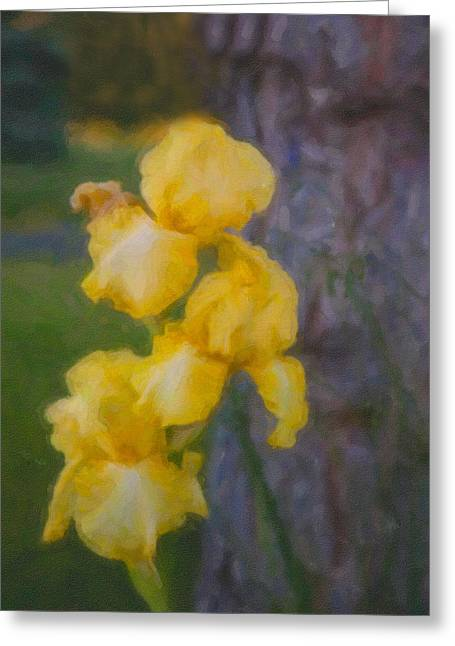 Friendly Yellow Irises Greeting Card by Omaste Witkowski