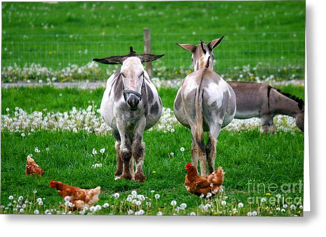 Friends Greeting Card by Dawn  De Vos
