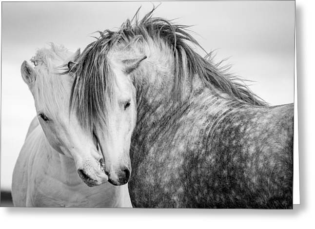 Friends II Greeting Card by Tim Booth