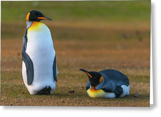 Friends In The Grass Greeting Card