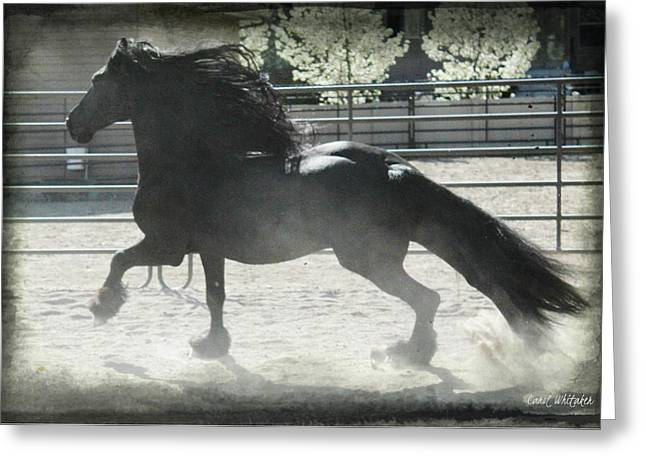 Friesian At Play Greeting Card
