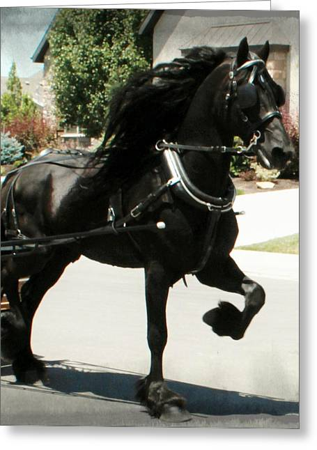 Friesian Driving Greeting Card