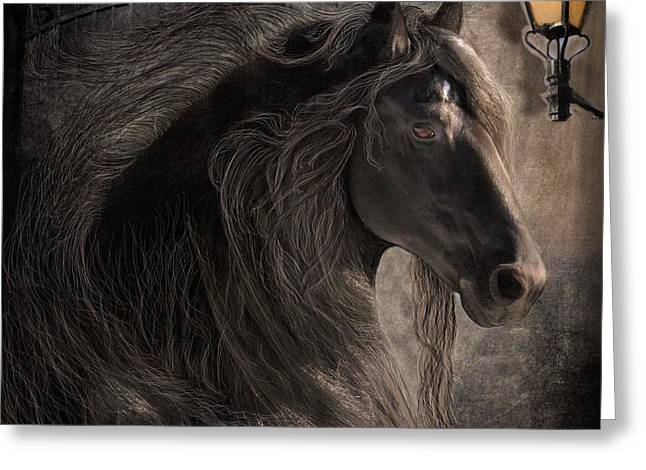 Friesian Glow Greeting Card by Fran J Scott