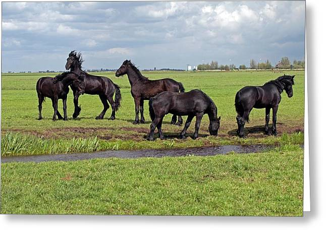 Friesian Horses Greeting Card by Dirk Wiersma