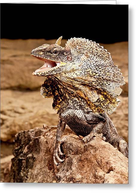 Frilled Lizard, Chalamydosaurus Kingii Greeting Card