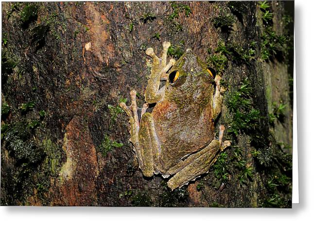 Frilled Tree Frog Greeting Card
