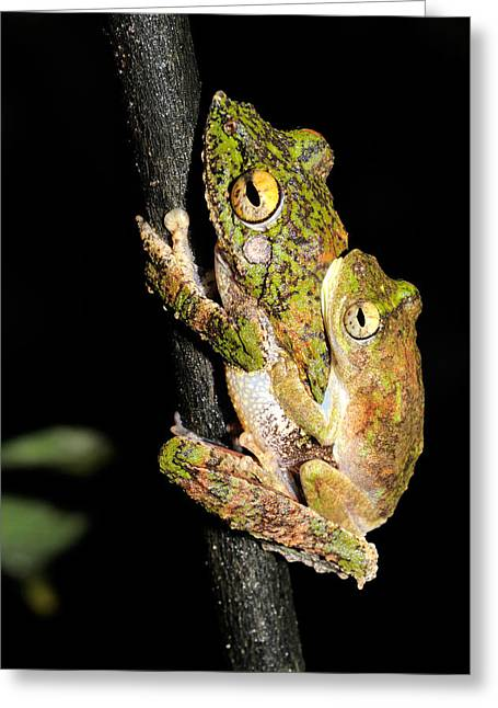 Frilled Tree Frogs Mating Greeting Card