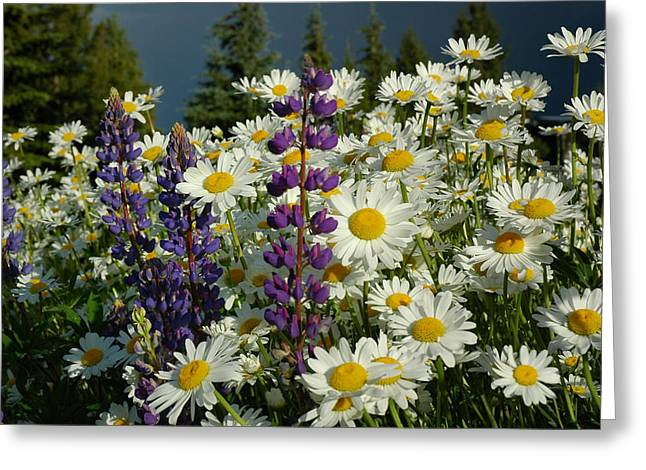 Frisco Flowers Greeting Card by Lynn Bauer