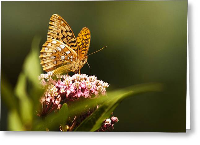Fritillary Butterfly On Pink Milkweed Flower Greeting Card by Christina Rollo