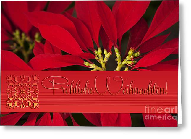 froehliche weihnachten poinsettia euphorbia. Black Bedroom Furniture Sets. Home Design Ideas