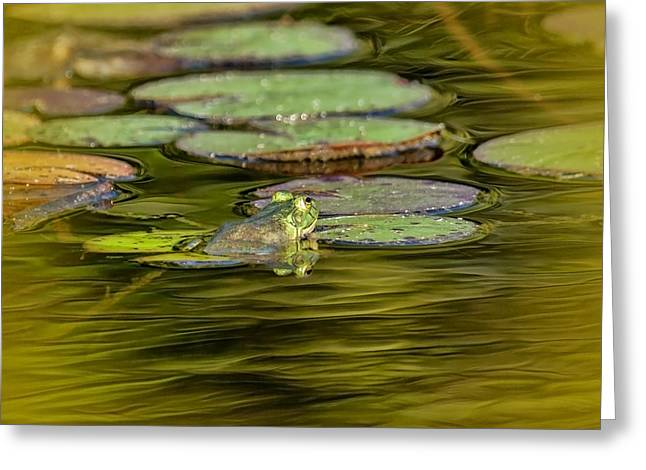 Frog And Lily Pad Greeting Card