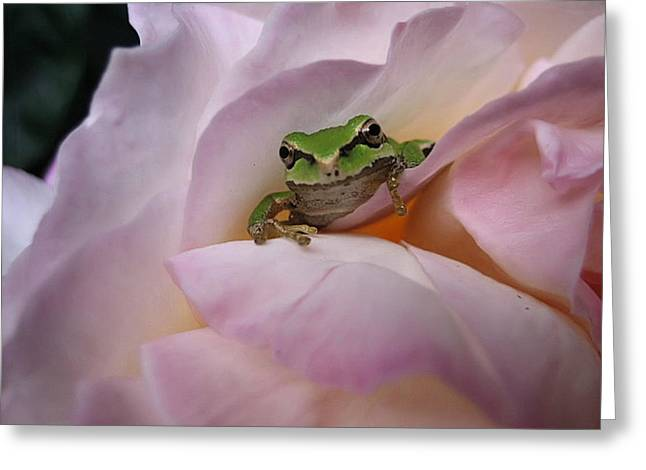 Greeting Card featuring the photograph Frog And Rose Photo 1 by Cheryl Hoyle