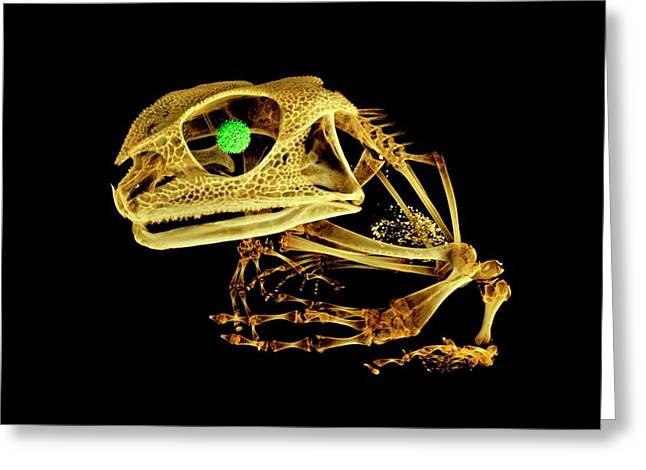 Frog Greeting Card by Dan Sykes/natural History Museum, London