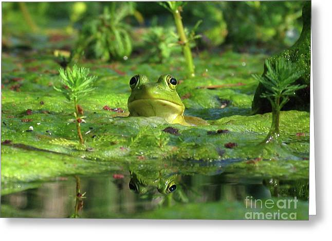 Frog Greeting Card by Douglas Stucky