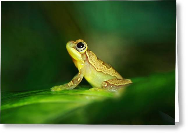 Frog Dreams Greeting Card by Paul Slebodnick
