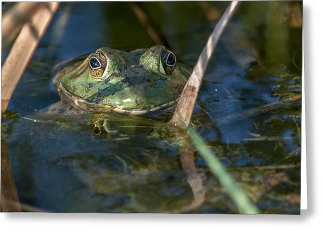 Frog Eyes Greeting Card