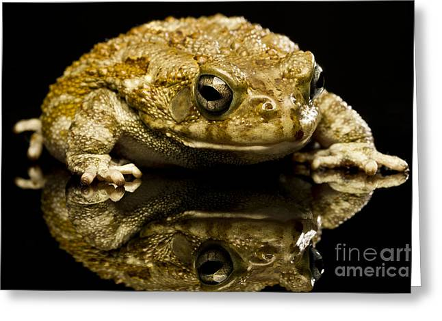 Greeting Card featuring the photograph Frog by Gunnar Orn Arnason