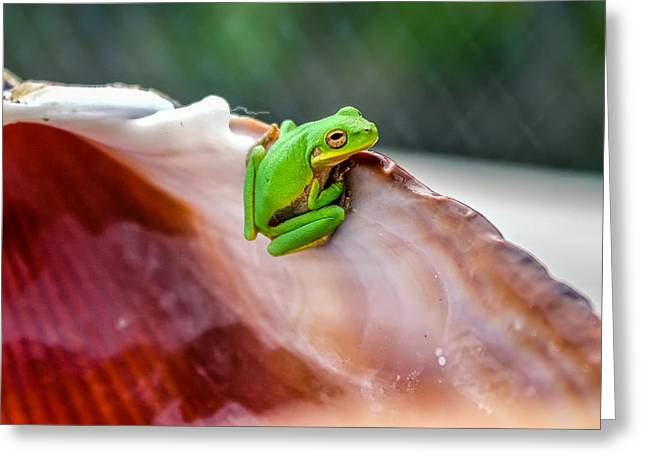 Greeting Card featuring the photograph Frog In A Cockle by Rob Sellers