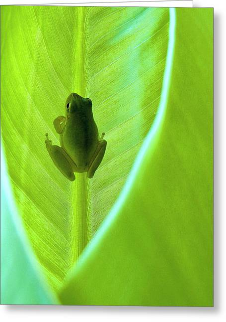 Greeting Card featuring the photograph Frog In Blankie by Faith Williams