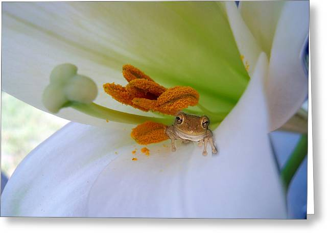 Frog In The Lily Greeting Card by Judy Hall-Folde
