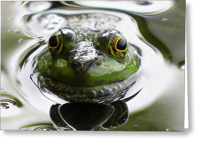 Greeting Card featuring the photograph Frog Kiss by Dianne Cowen
