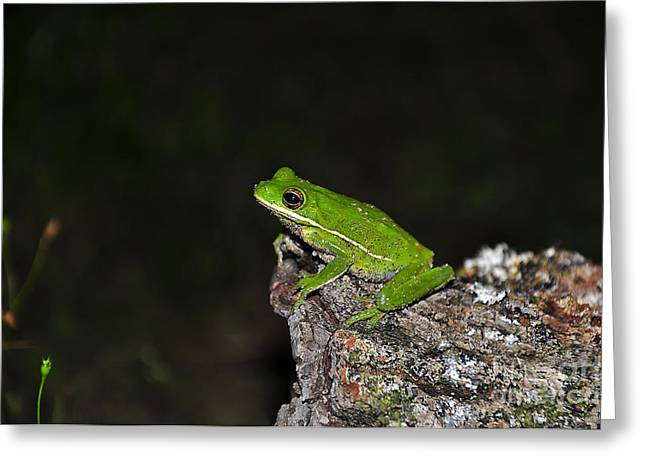 Frog On A Log Greeting Card by Al Powell Photography USA