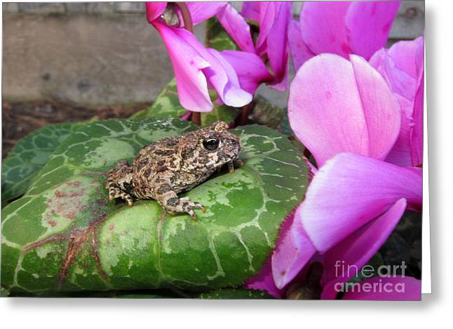 Frog On Cyclamen Plant Greeting Card