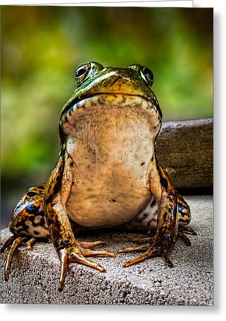 Frog Prince Or So He Thinks Greeting Card