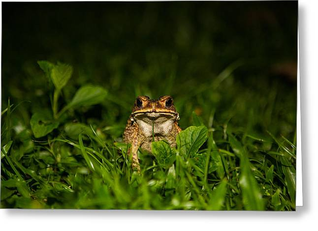 Frog Stare Greeting Card by Mike Lee