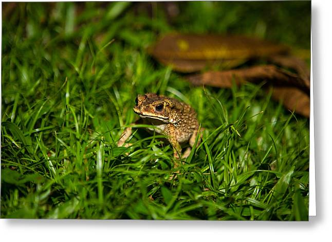 Froggie Greeting Card by Mike Lee