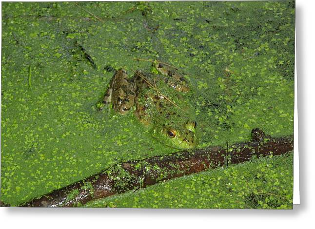 Greeting Card featuring the photograph Froggie by Robert Nickologianis