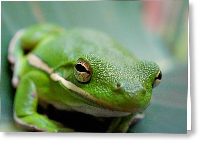 Greeting Card featuring the photograph Froggy Smile Squared by TK Goforth
