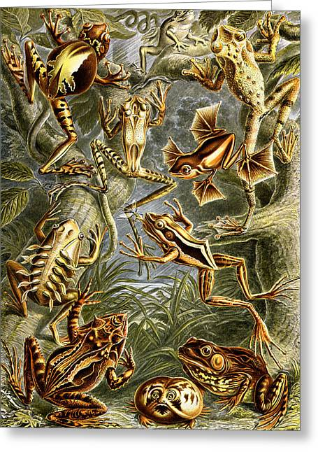 Frogs Frogs And More Frogs Greeting Card