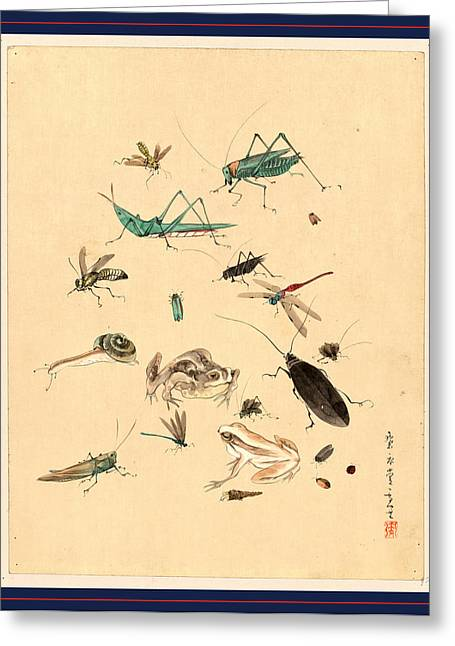 Frogs Snails And Insects, Including Grasshoppers Beetles Greeting Card
