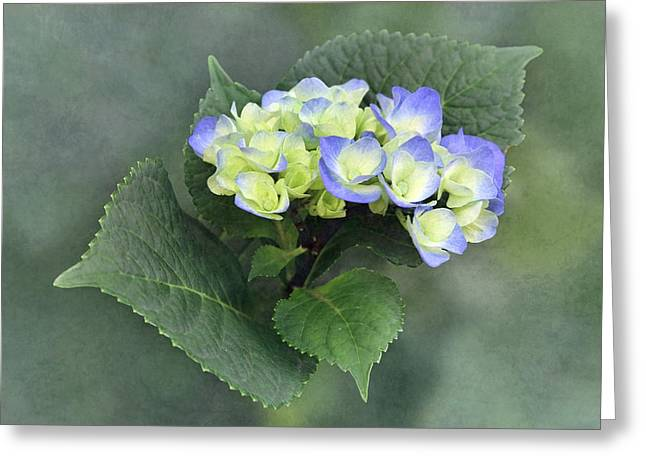 From Green To Blue Greeting Card by Angie Vogel