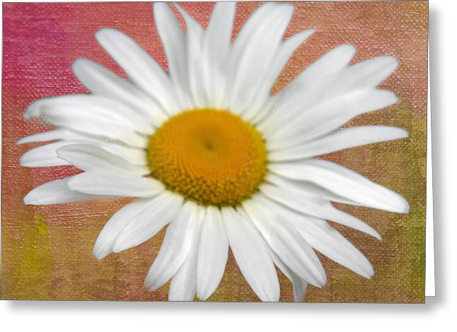 From My Daisy Garrden Greeting Card