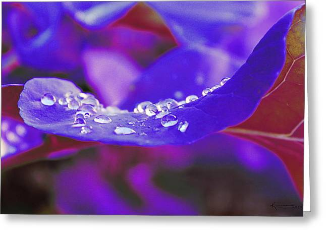 From My Garden In The Backyard Greeting Card by Kume Bryant