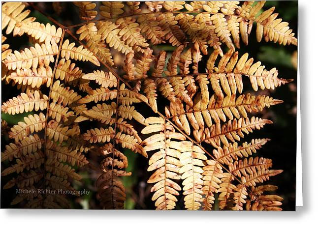 Frond Close Up Greeting Card