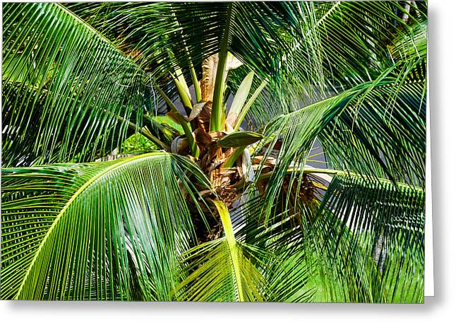 Fronds And Center Greeting Card