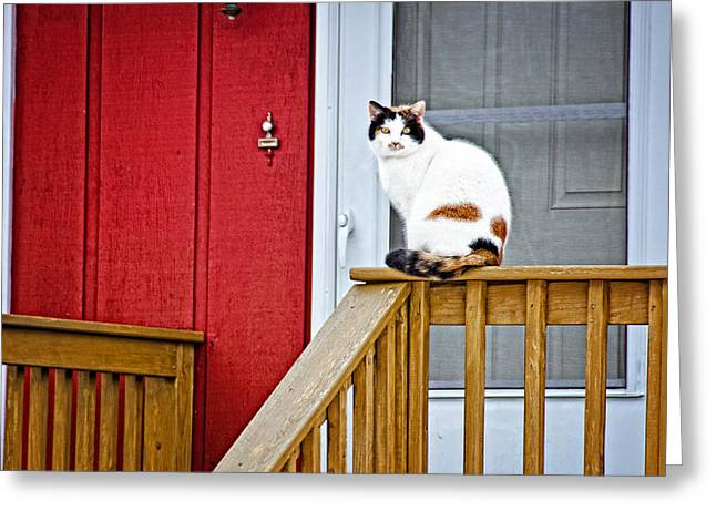 Front Porch Cat Greeting Card