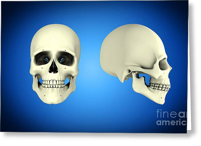 Front View And Side View Of Human Skull Greeting Card by Stocktrek Images